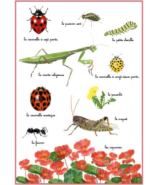 Planche #2 à partir du livre de la Coccinelle