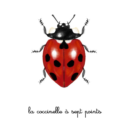 la coccinelle à sept points illustration