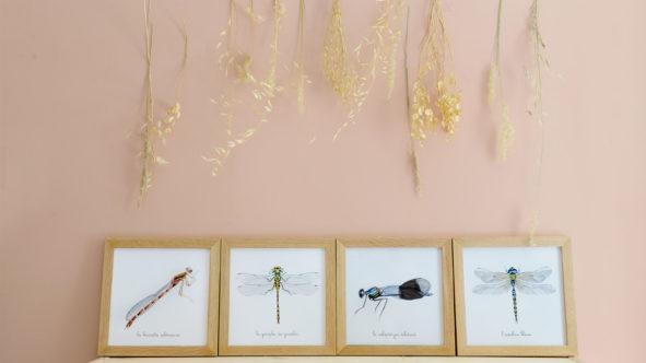 Les libellules et les demoiselles