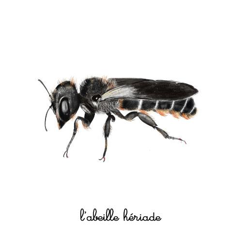 l'abeille heriade