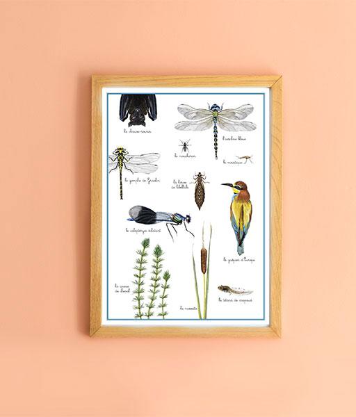 Composition à partir du livre de la libellule du jardin de Juliette et Joséphine