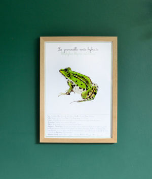 la grenouille verte - grande illustration