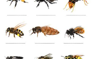 Jeu d'été : reconnaître et nommer les insectes
