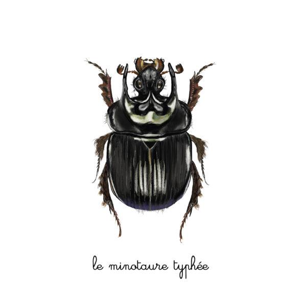 le minotaure typhée