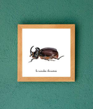 le scarabée rhinoceros
